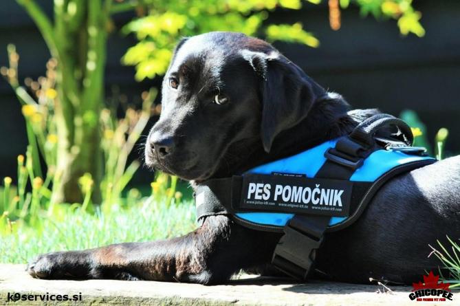 Smo sponzorji doživljenskega hranjenja psa pomočnika TARA